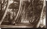 Coconut Lane, Waikiki, Hawaii, 1916 Stretched Canvas Print
