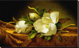 Magnolias on Gold Velvet Cloth Stretched Canvas Print by Martin Johnson Heade