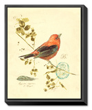 Gilded Songbird III Framed Canvas Print by Chad Barrett
