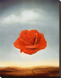 Rose Meditative, c.1958 Stretched Canvas Print by Salvador Dalí
