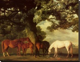 Green Pastures Stretched Canvas Print by George Stubbs