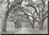 Oak Arches Stretched Canvas Print by Jim Morris