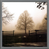 Morning Texture Framed Canvas Print by Harold Silverman