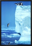 Penguins Diving Off an Iceberg Framed Canvas Print by Steve Bloom