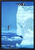 Penguins Diving Off an Iceberg Framed Canvas Print by Steve Bloom