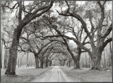 Oak Arches Framed Canvas Print by Jim Morris