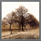 Row of Trees Framed Canvas Print by Harold Silverman