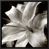 Pure Lily Framed Canvas Print
