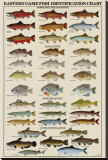 Eastern Gamefish Identification Chart Stretched Canvas Print