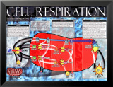 Respiration cellulaire Affiches