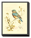 Gilded Songbird IV Framed Canvas Print by Chad Barrett
