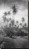 Coconut Grove, Lahaina, 1910 Stretched Canvas Print by Ray Jerome Baker