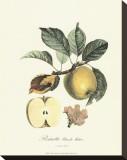 Apple Stretched Canvas Print by Pierre-Antoine Poiteau
