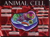 Animal Cell Stretched Canvas Print