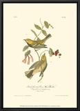 Black-Throated Green Wood Warbler Framed Canvas Print by John James Audubon