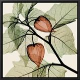 Japanese Lantern Framed Canvas Print by Steven N. Meyers