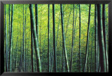 The Bamboo Grove Kunstdrucke von Robert Churchill