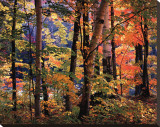 Maples and Birches Stretched Canvas Print by Joseph Holmes