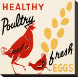 Healthy Poultry-Fresh Eggs Stretched Canvas Print