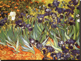 Irises, Saint-Remy, c.1889 Stretched Canvas Print