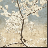 Cherry Blossoms I Stretched Canvas Print by John Seba
