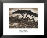 Monterey Cypress Prints by Paul Kozal
