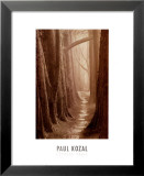 Cypress Trail Prints by Paul Kozal