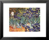 Iris Poster von Vincent van Gogh