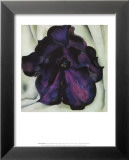 Purple Petunia Prints by Georgia O'Keeffe