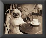 Cafe Pug Poster von Jim Dratfield