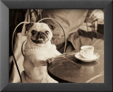Cafe Pug Prints by Jim Dratfield