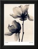 Tulpen-Magnolie Kunstdruck von Judith Mcmillan