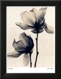 Magnolia Lámina por Judith Mcmillan