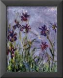 Iris Poster av Claude Monet
