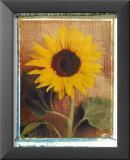 Sonnenblumen Kunstdrucke von Vincenzo Ferrato