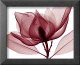 Red Magnolia I Kunst von Steven N. Meyers