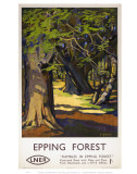 Rambles in Epping Forest Posters