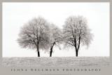 Three Trees Posters by Ilona Wellmann