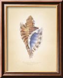 Angular Triton Kunstdrucke von Richard Van Genderen