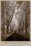 Country Road II Posters av Ilona Wellmann