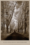 Country Road II Prints by Ilona Wellmann
