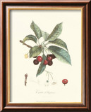 Cherries Print by Pierre-Antoine Poiteau