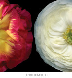 Ranunculus Left Prints by Pip Bloomfield