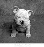 Baby Tears Plakater af Ginger DeLater