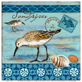 Shorebirds, Sandpiper Posters by Jennifer Brinley