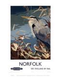 Norfolk Heron Posters