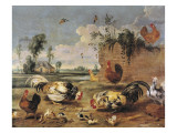 Fight of Cocks Premium Giclee Print by Frans Snyders