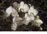 Bountiful Orchids Plakater af Donna Geissler