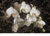 Bountiful Orchids Prints by Donna Geissler