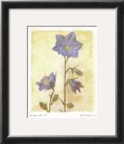 Campanula II Prints by Amy Melious
